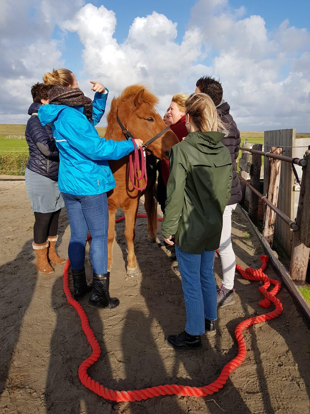 Paardencoaching voor jong en oud teamtraining